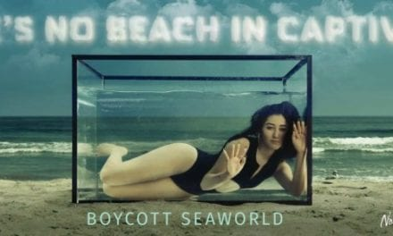 Noah Cyrus to SeaWorld: 'send orcas to sanctuary'