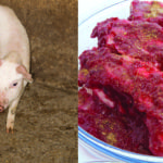 Teen dies after brain infection from eating undercooked pork