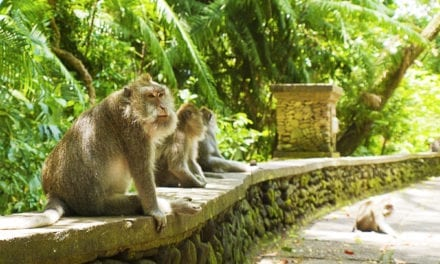 Victory: After 20 Years, Art Show Won't Bring Back Monkey Act