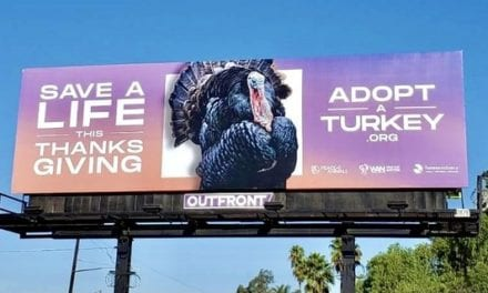 Peace 4 Animals & WAN Promote a Plant-Based Diet & Support Farm Sanctuary With The 'Save a Life This Thanksgiving, Adopt a Turkey' Billboard Campaign In Los Angeles