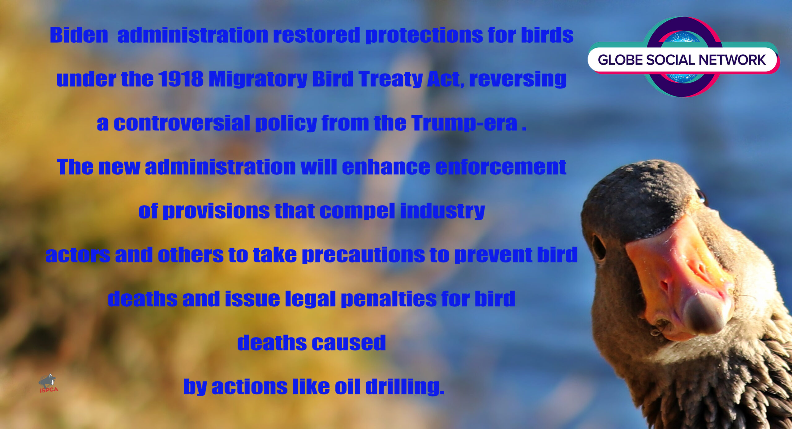 Sierra Club Welcomes Biden Administration's Restoration of Protections for Migratory Birds